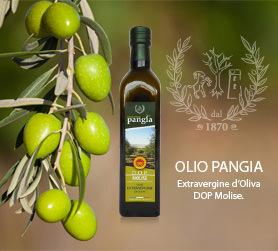 Olio Pangia DOP - nuova bottiglia e latta per la ristorazione albergheira. Extra virgin olive oil Pangia - Italy / Extra natives Olivenöl Pangia - Italien.
