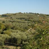 Terra d'ulivo