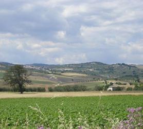 Extra virgin olive oil Pangia - Italy / Extra natives Olivenöl Pangia - Italien. Immagine scorcio / vista del Rotellese in primavera, terra da dove nasce l'Olio Pangia, prodotto eleario pregiato con Denominazione di Origine Protetta DOP Molise.