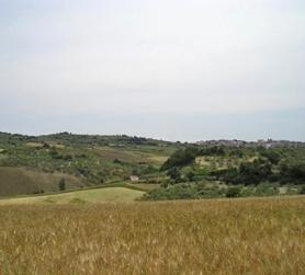 Rotello - Molise: terra dell'olio extravergine di oliva DOP