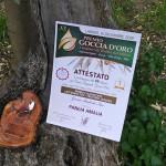 Attestato e Premio Goccia d'Oro - Olio Pangia DOC Molise